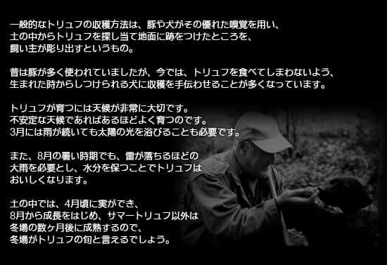 ●トリュフの収穫方法