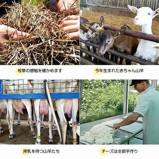 牧草の感触を確かめます/今年生まれた赤ちゃん山羊/搾乳を待つ山羊たち/チーズは全部手作り
