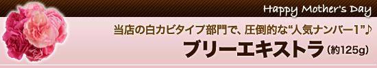 """【2】当店の白カビタイプ部門で、圧倒的な""""人気ナンバー1""""♪"""