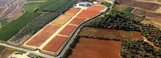 野菜作りに適した土地